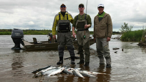 Strong Start to the 2017 Sockeye Salmon run on the Alagnak River